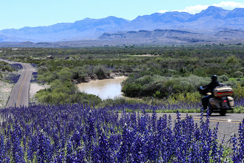 Big Bend Bluebonnets along the River Road in Presidio County Texas.