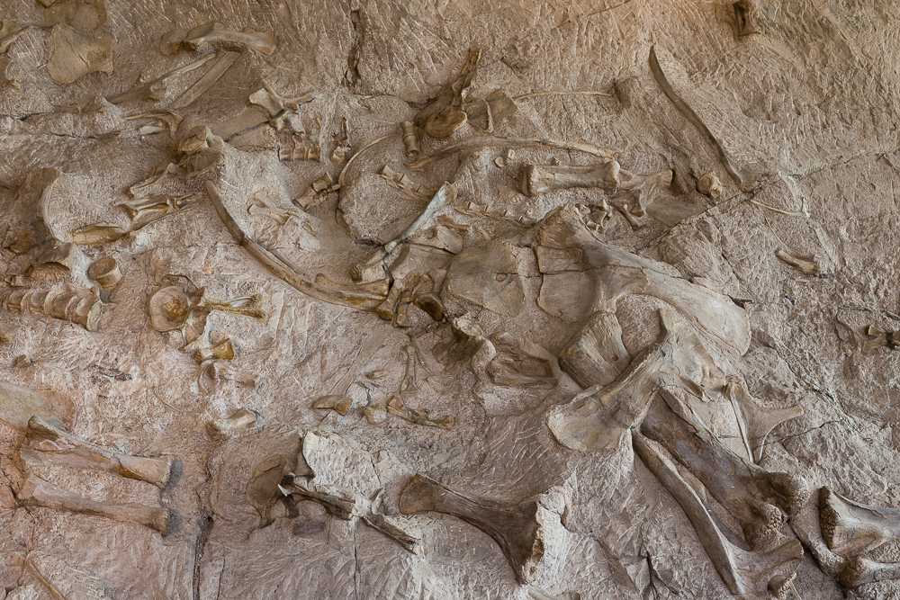 For 150-million years, these dinosaur bones have been sealed in layers of rock.