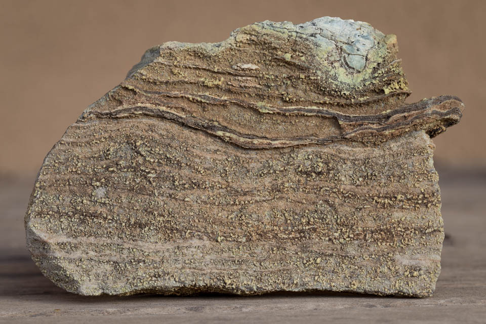 Tiny, single-celled cyanobacteria create layered sedimentary rocks.