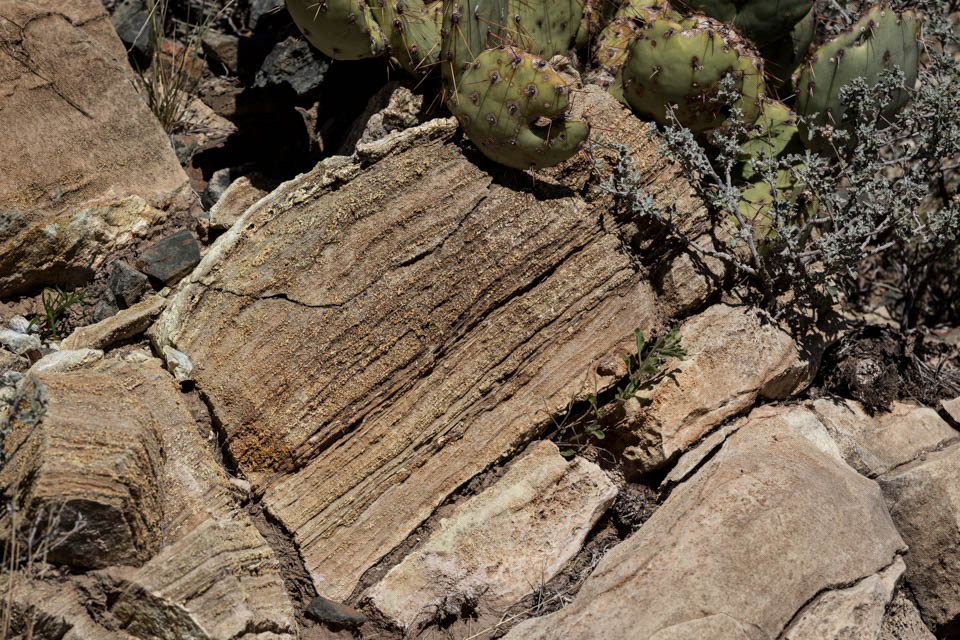 A layered band of stromatolites are exposed in the hillside.