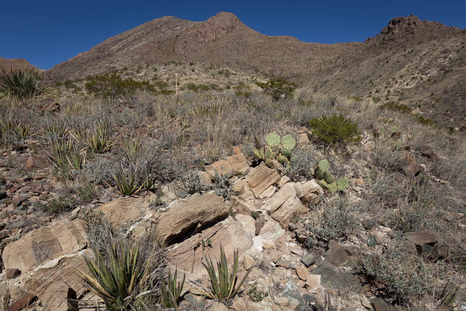 Stromatolite band exposed in the Franklin Mountains near El Paso.